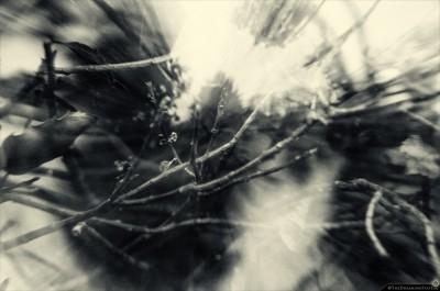 leafsticks_DSC5216