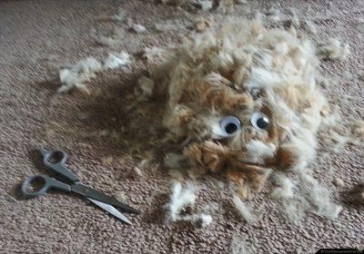 haircut-20130519_132416